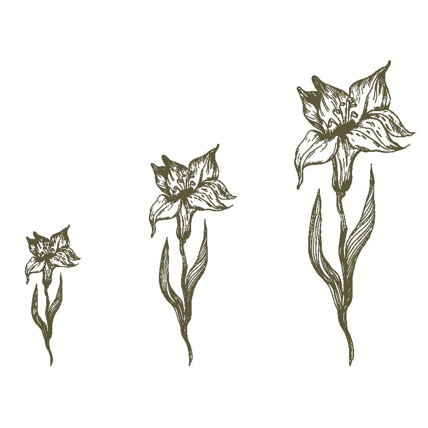 Altezza pianta in fioritura - Piccola