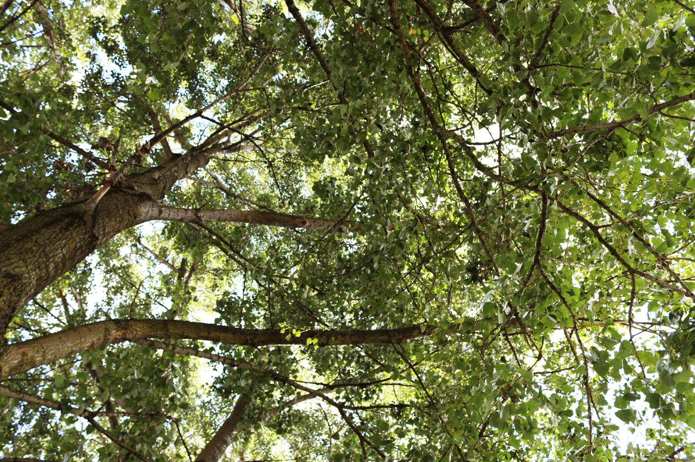 dona-un-albero