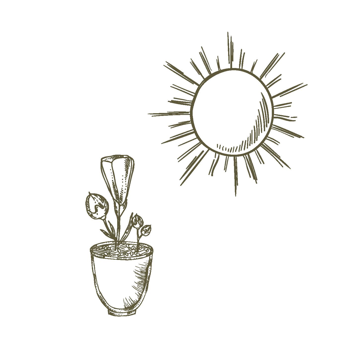 Esposizione - Sole